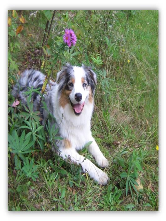 Canine seroprevalence