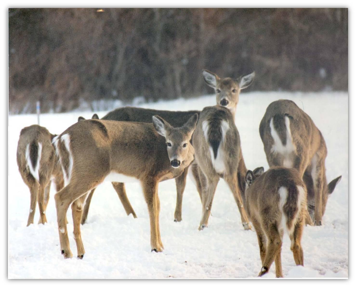 Deer density